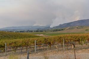 Smoke From Wildfires Over Hills and Vineyards